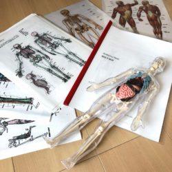 RYT200 ヨガ解剖学 yoga anatomy